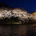 Photos: 観桜の夕べ