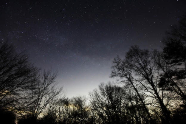 写真: 銀河の森