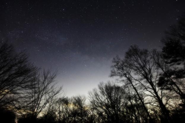 Photos: 銀河の森