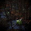 写真: 春は来たりぬ