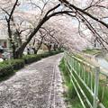 IMG_9128 H27桜