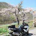 Photos: IMG_9274 木祖村、桜も