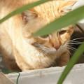写真: 2009年03月12日の茶トラのボクチン(4歳)