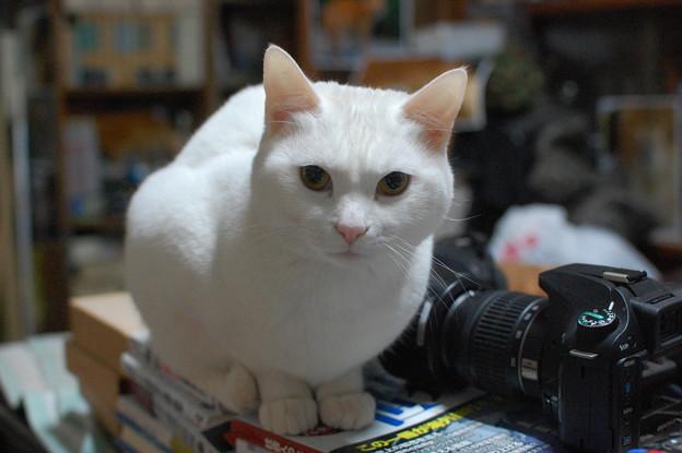 写真: 2015年02月24日のシロちゃん(もう直ぐ2歳)