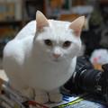 Photos: 2015年02月24日のシロちゃん(もう直ぐ2歳)