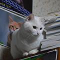 写真: 2015年4月29日のシロちゃん(2歳)