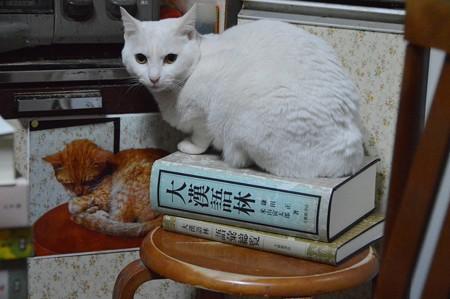2015年05月01日のシロちゃん(2歳)