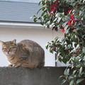 Photos: 猫 と 椿