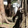 Photos: 森の忍者・蝦夷栗鼠