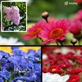 美しい花達に囲まれて~MY birthday^^♪