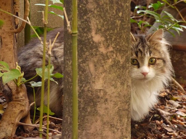 Photos: 庭で佇む 2015.3.31?