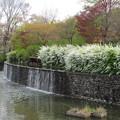 Photos: 武蔵の池