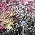 バス停の花