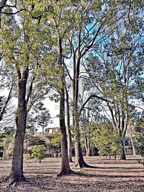 Photos: 公園でチョイ鉄