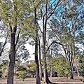 公園でチョイ鉄