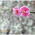 春のツーショット