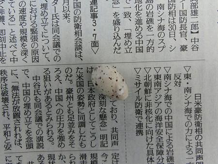 孵らなかった卵