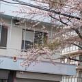 Photos: 4月19日で桜が咲いてた。