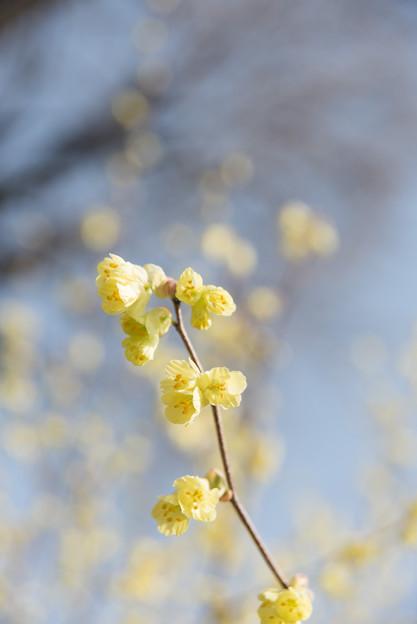 【新宿御苑(黄色の花)】3