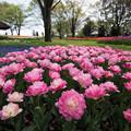 Photos: 【昭和記念公園(ダブルシュガー)】1