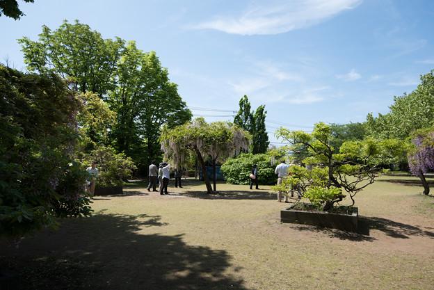 【大船植物園(藤の花)】2