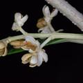【オリーブの花】3