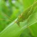 写真: 緑一色