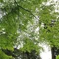 Photos: IMG_0110春日大社神苑萬葉植物園・新緑