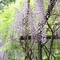 Photos: IMG_0140春日大社神苑萬葉植物園・春日砂ずり