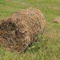 小貝川堤防の牧草ロール