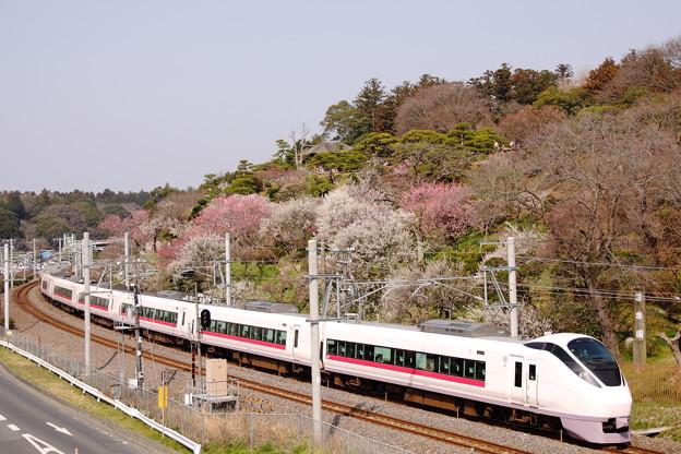 Photos: 特急ときわ53号