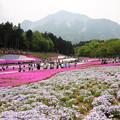 Photos: 羊山公園 芝桜