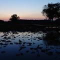 夕方の親水公園