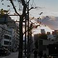 写真: 職場の前の道@西新宿