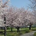 Photos: 桜街道