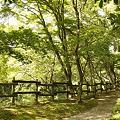 Photos: 庭園の小道(縦)