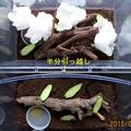 Photos: 5/27今日のスズちゃん