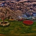 はままつフラワーパーク 夜桜 360度パノラマ写真(4) HDR