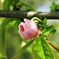 Photos: 咲き出し