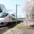 桜とE657系