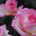 薔薇のソフトクリーム