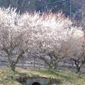 心穏やかに日本の平和を願う
