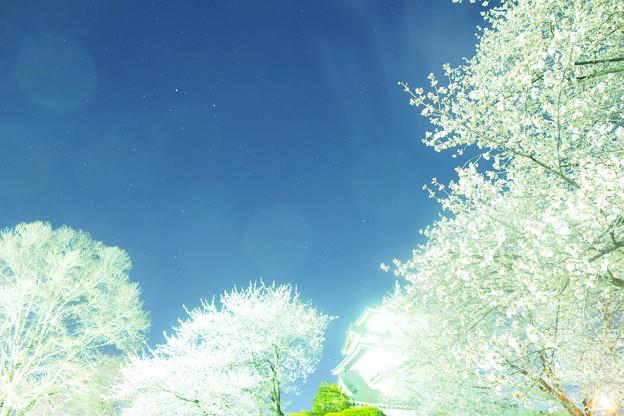 銀河を臨む天守閣、桜