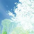 ニュートン、アインシュタイン、ガリレオ、コペルニクスといった歴代の物理学者、天文学者も春はお花見をしていたのかな~