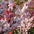 こんなに美しくて可憐な桃を見ていると生きているって素晴らしいと本当に思います。