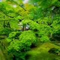 緑が奏でる芸術   京都嵐山常寂光寺