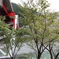 大歩危駅、蜂須賀桜