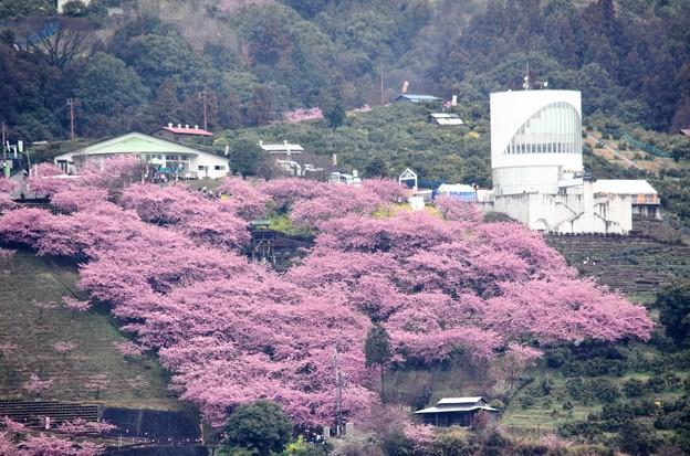 松田 山 ハーブ ガーデン