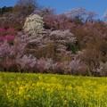 花見山公園にて