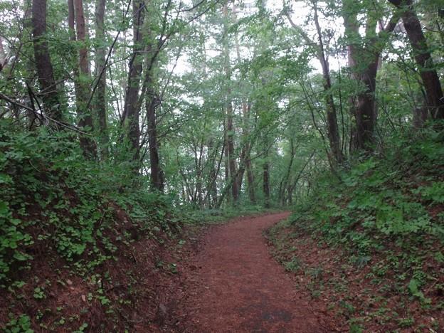 桧原湖周りの林道
